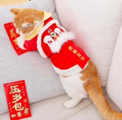 貓新春舞龍舞獅款衣服