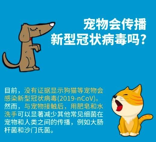 武漢肺炎,寵物傳染