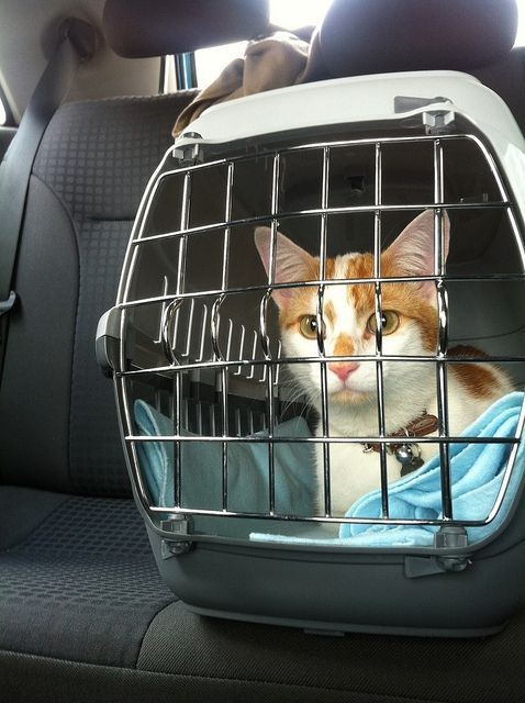 帶貓咪返鄉