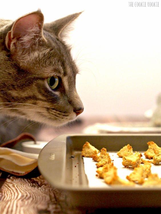 過年貓咪禁忌食物