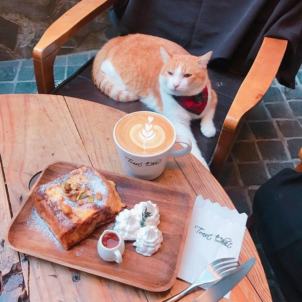 國父紀念館貓咖啡廳