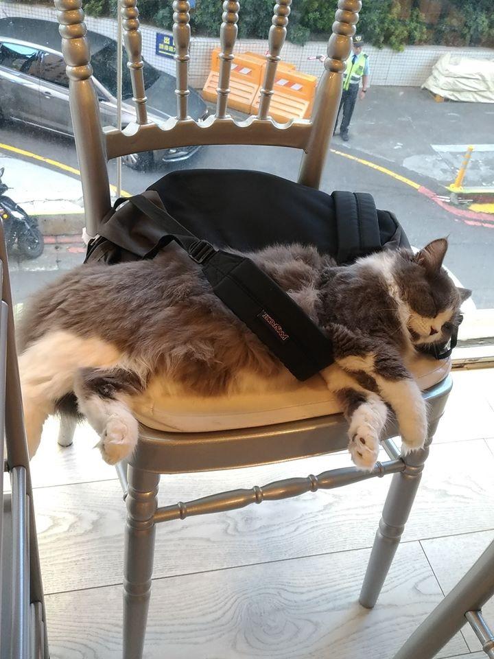 貓咪桌遊咖啡店