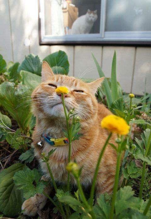過年貓咪禁忌花種
