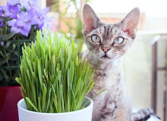 貓草的實用知識