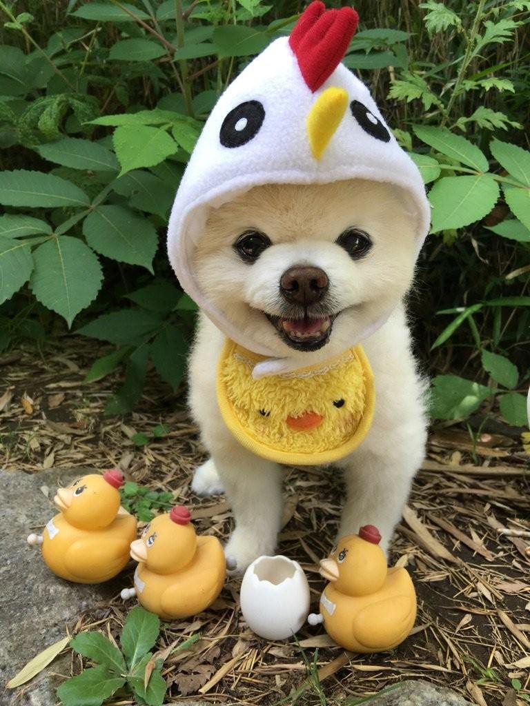 日本網紅狗俊介