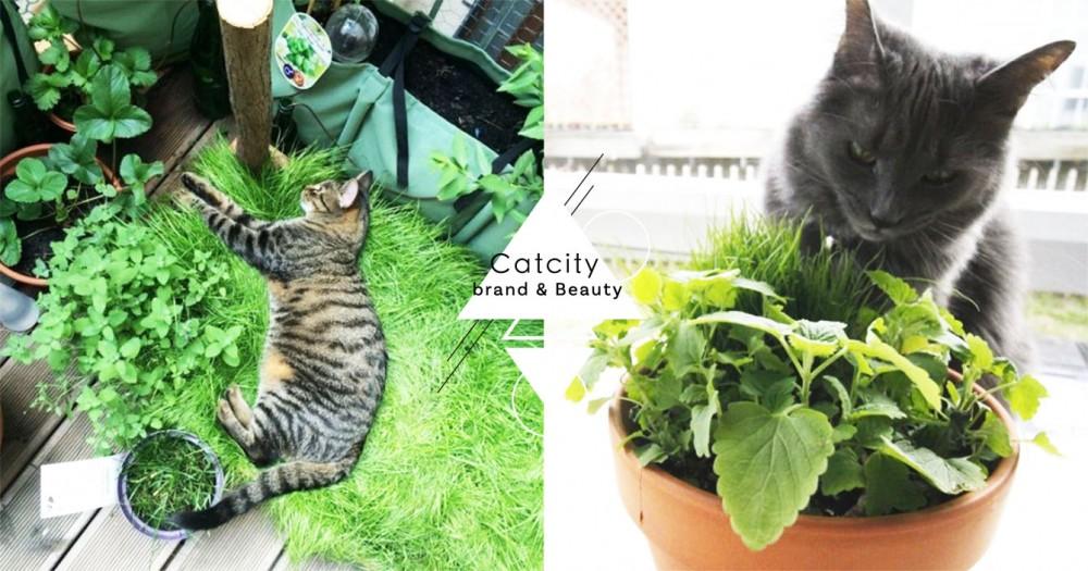 注意!貓草吃多會便秘?不能每天餵?關於貓草的 4 個實用知識!