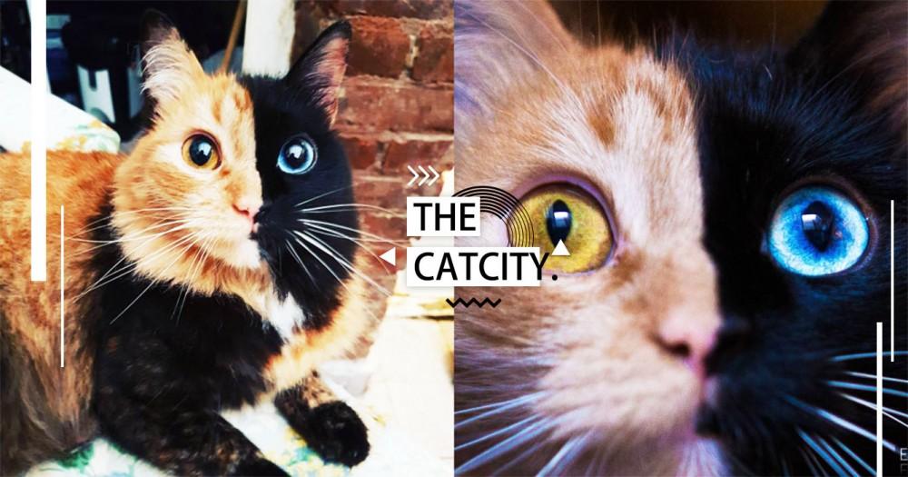 天生陰陽臉!阿根廷網紅「喀邁拉貓」臉半黑半橘,連眼珠都是對稱異色瞳!