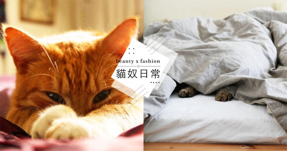 為什麼貓愛跟人睡覺?陸網友解析主要 4 種原因,網驚:居然是這樣,超感動!