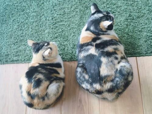 同胎姊妹像母女