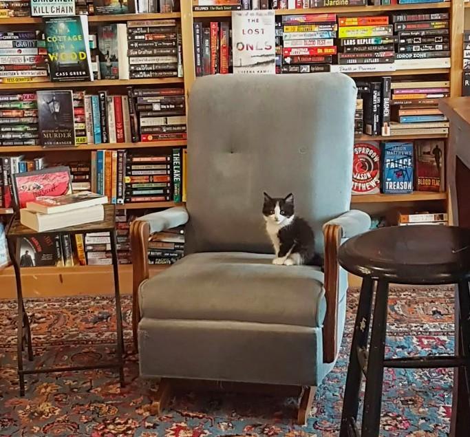 加拿大貓咪中途書店