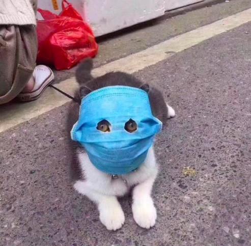 爆紅口罩貓