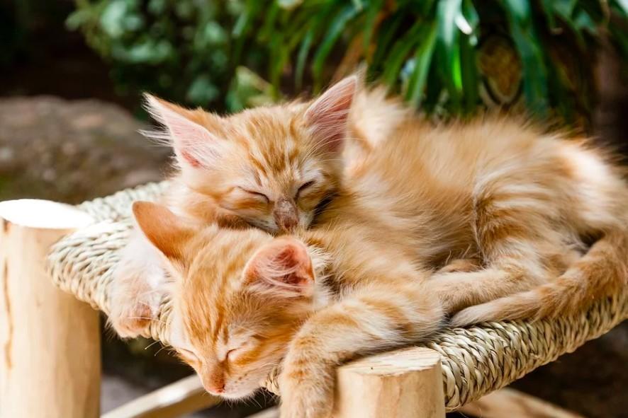 貓咪愛躲棉被睡覺