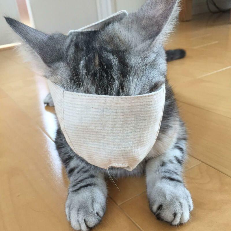 貓剪指甲防咬罩