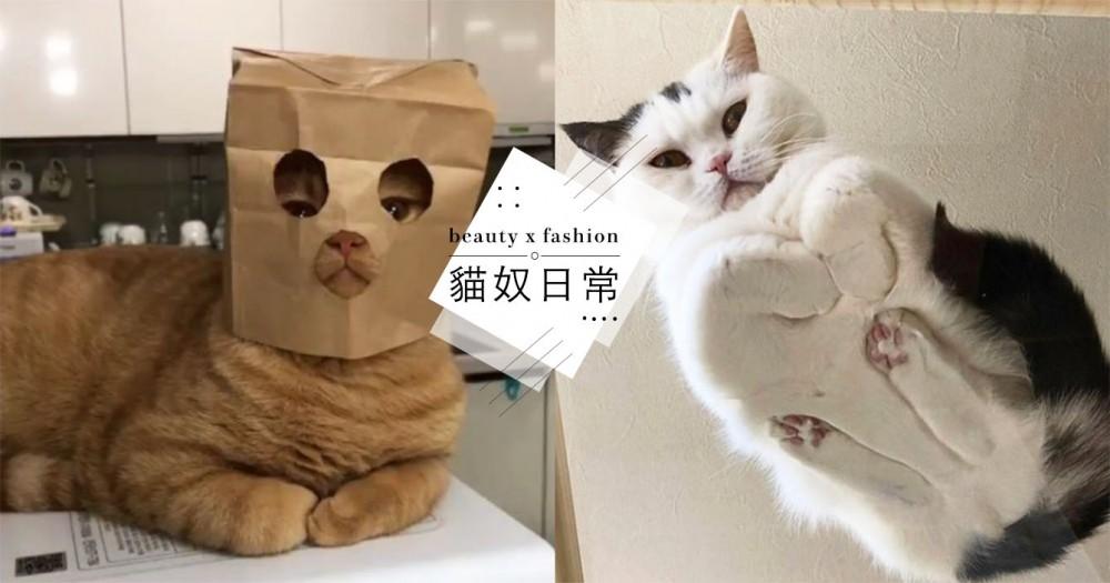 【貓咪行為】不只是保暖!「貓收手手」網友解析 5 種理由,最後一個也太暖心了!