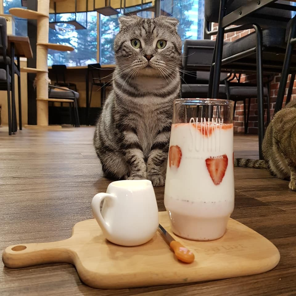 精選台北貓咖啡廳