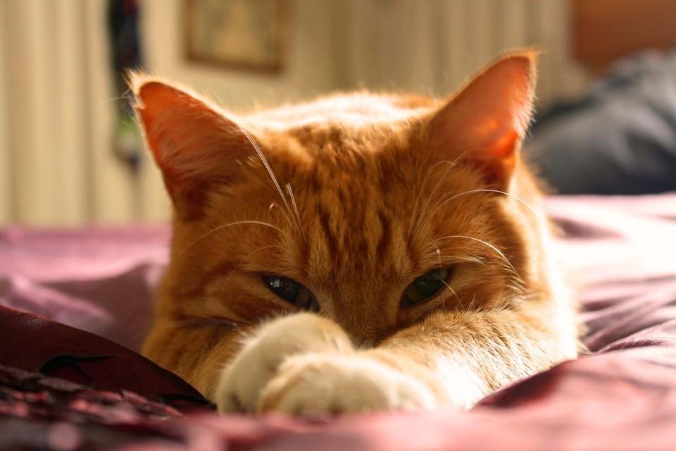 貓咪愛和人睡覺的原因