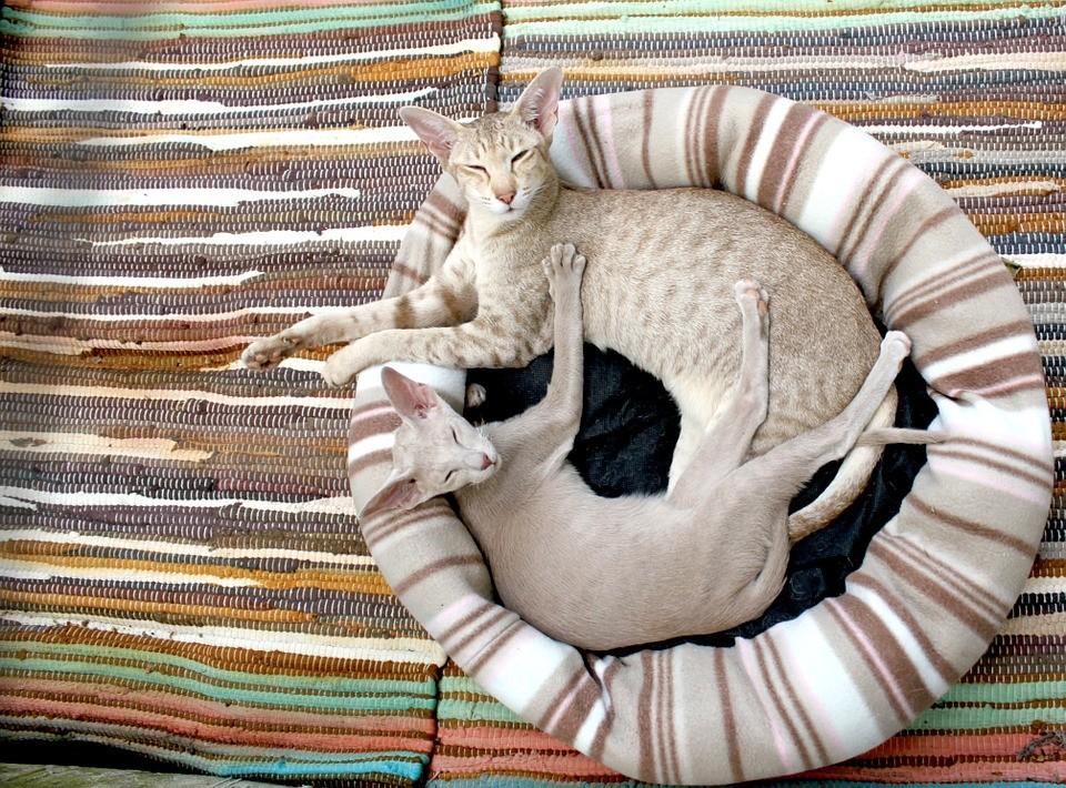 交大獨創貓腎病檢測