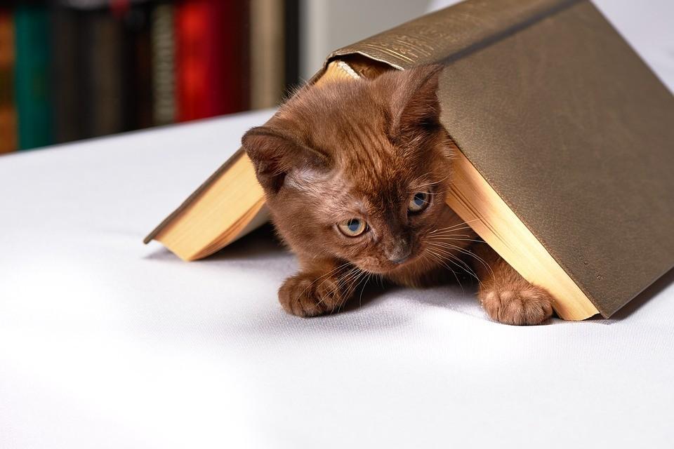 貓咪取名,名字