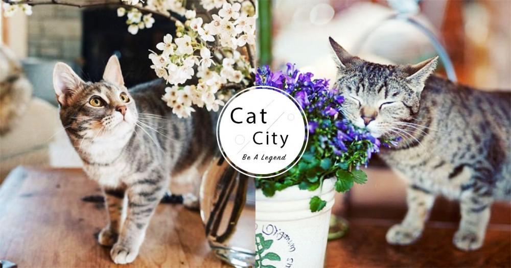 【對貓有毒植物】10 種居家危險植物!貓誤食百合、金針花恐致命!