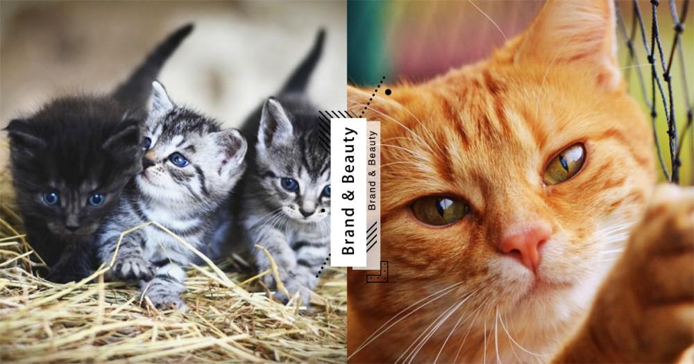 【武漢肺炎】寵物該如何防護?獸醫 7 點建議預防病菌傳染!
