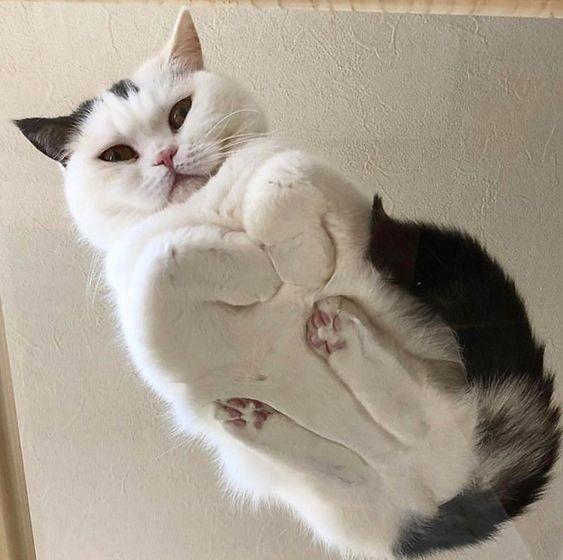 貓咪折手手