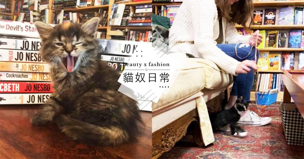 小貓陪你看書!加拿大中途書店提供「喵書僮服務」,「呼嚕+坐大腿」萌死網友!