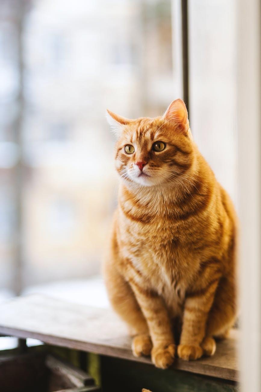 腎貓的照料方法