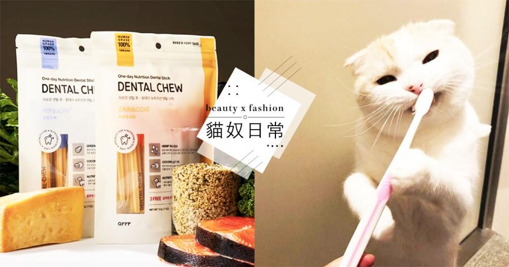 【貓潔牙推薦】網推 5 個有效牙齒清潔產品,讓貓咪遠離口臭、牙周病!