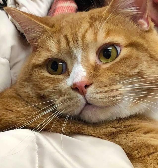 米克斯,橘貓,個性,
