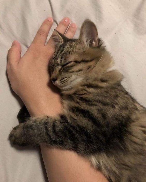 新手養貓,養貓迷思