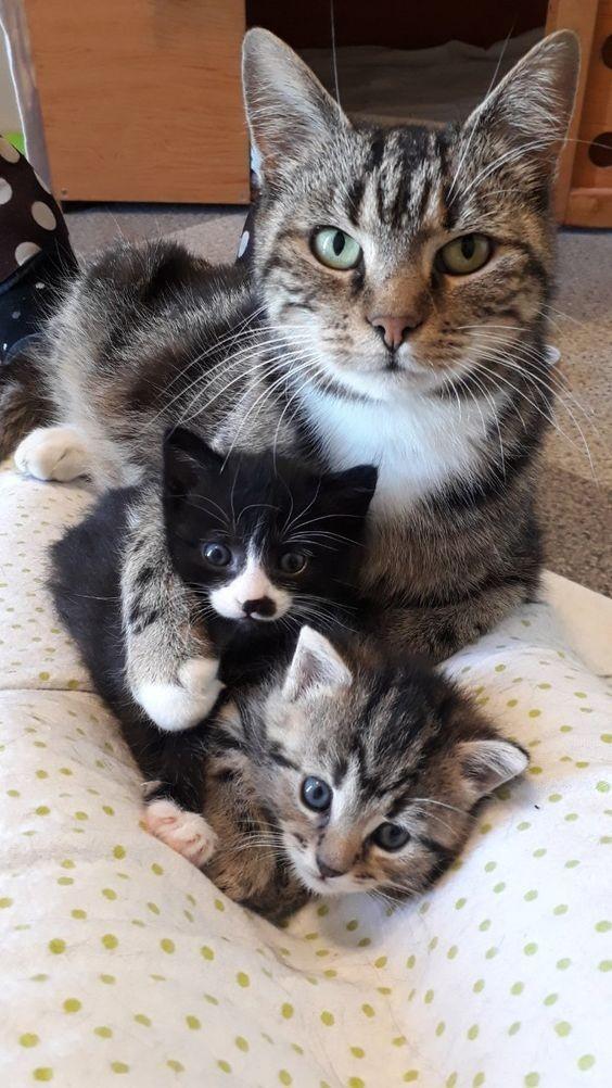 貓咪呼嚕,呼嚕反應,貓咪