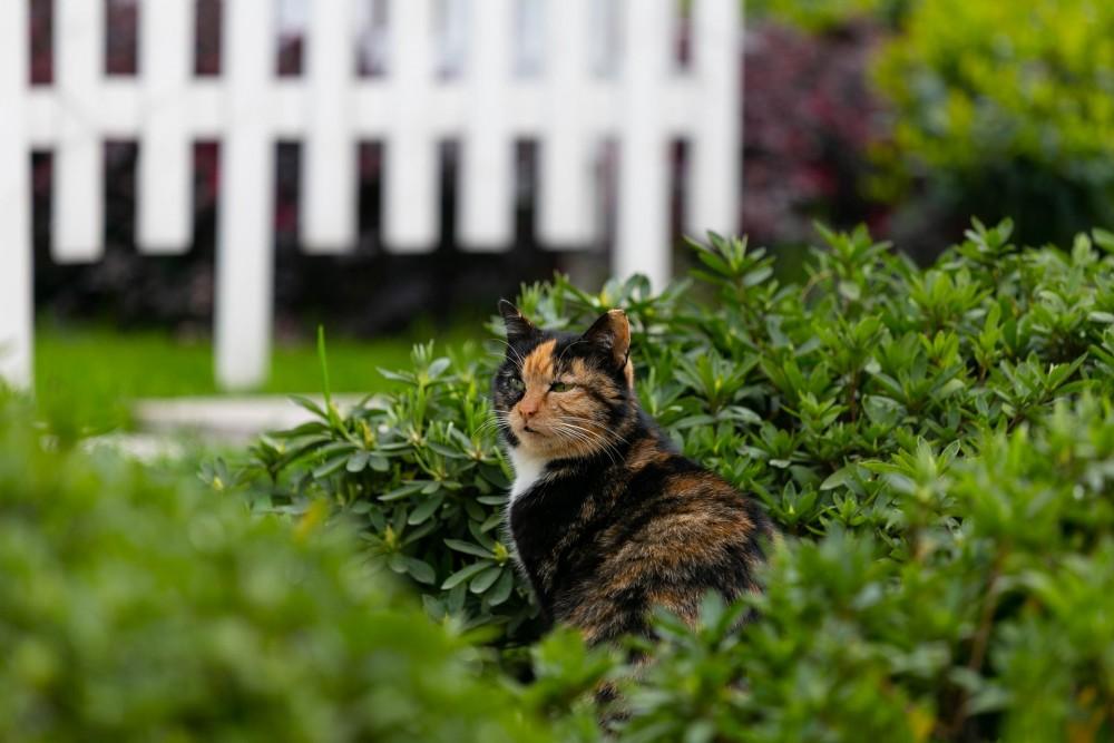 貓咪走失,協尋貓咪,剪刀找貓法