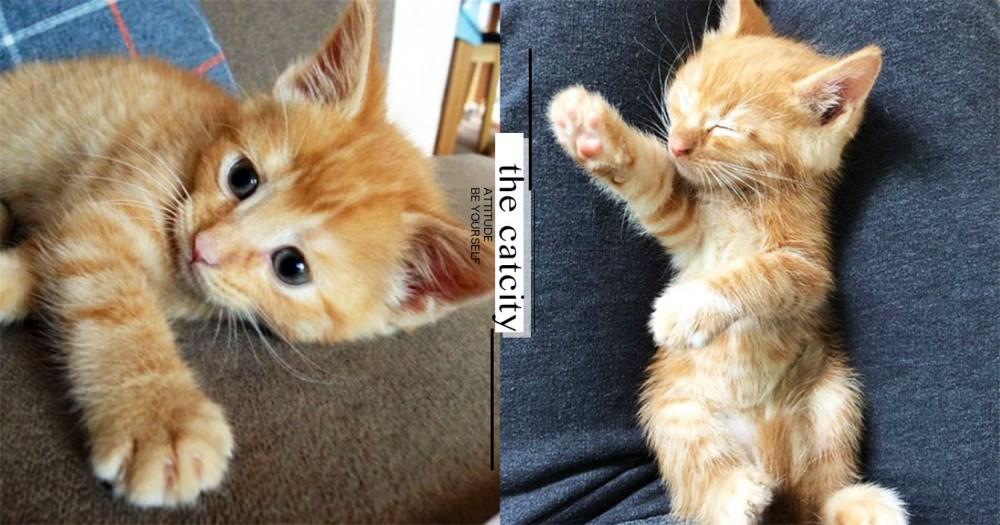 【貓咪認養】不吃不喝是生病了?從收容所帶貓回家,你需要注意 3 件事!