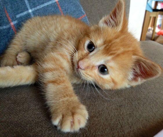 貓咪認養,新手貓奴,貓咪領養
