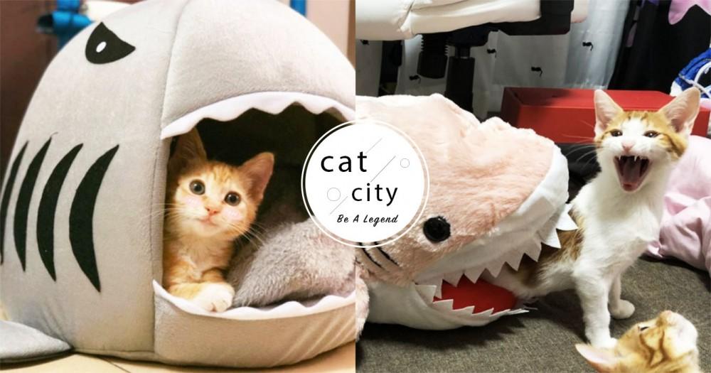 【貓窩】日本橘貓「被鯊魚吃掉」表情猙獰,浮誇演技引熱議:鯊魚窩哪買