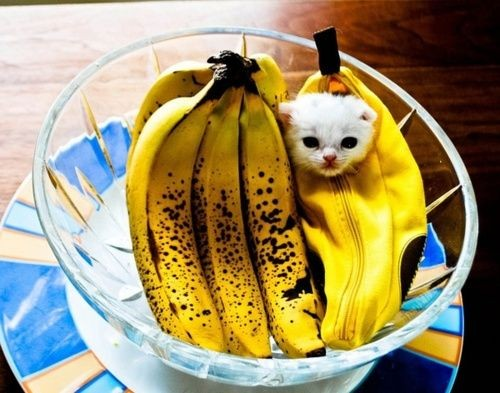 貓咪可吃水果,貓咪知識