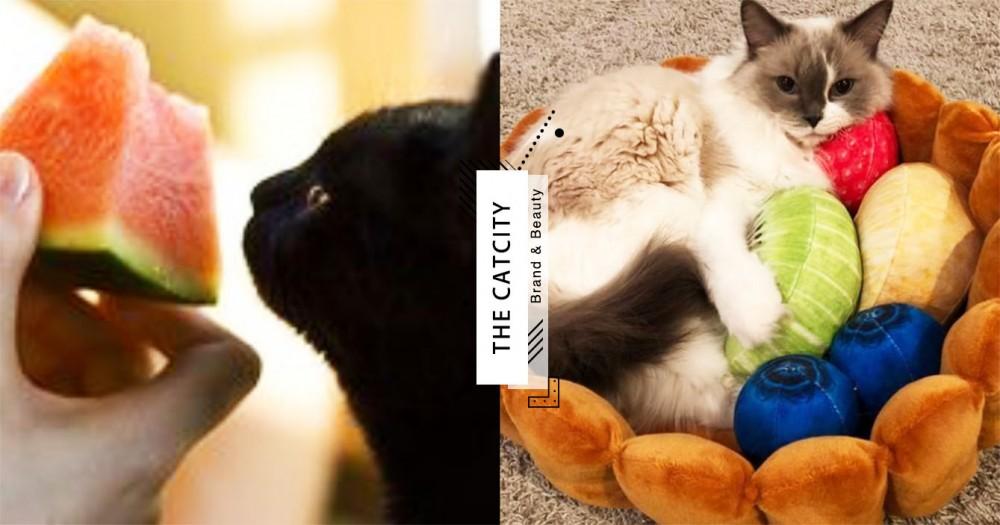 【貓咪可吃水果】10 種有益水果!「西瓜、木瓜」竟是補水+消化好幫手