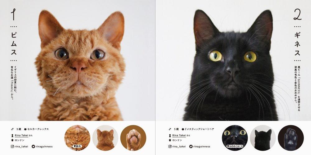 日本,網紅貓,萌貓,100隻貓咪圖鑑.