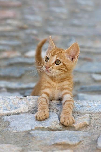 貓咪不友善,誤解