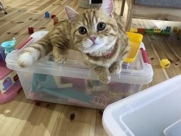 日本推特熱文,橘貓
