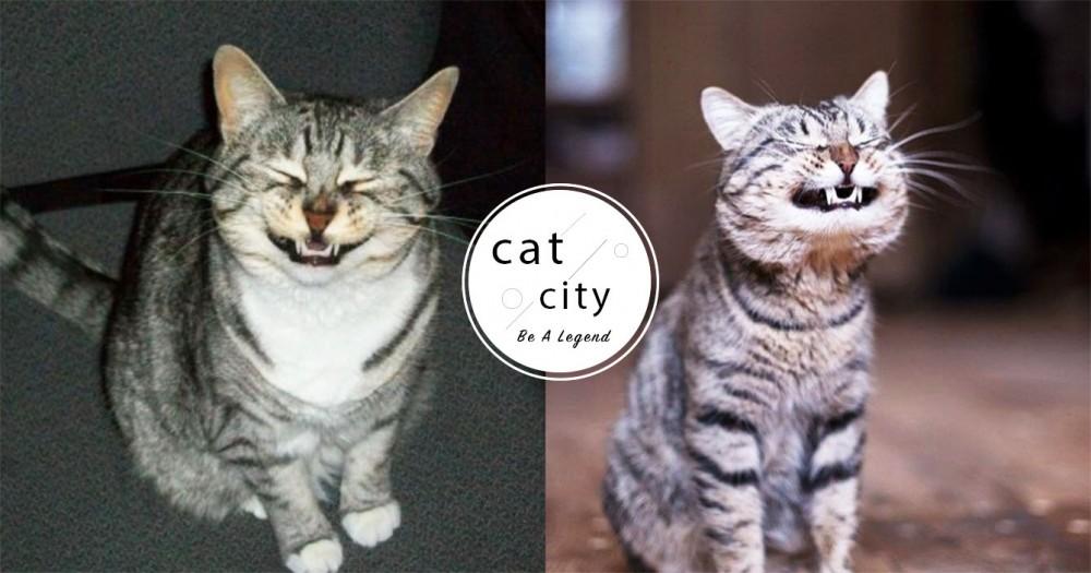 【貓咪冷知識】貓對「噴嚏聲」獨特反應!嘶嘶叫到底是為啥?3 種原因大解析!