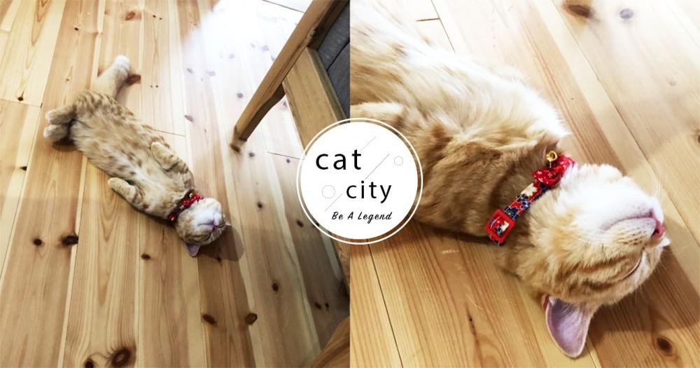 差點踩到!爆走橘貓「一秒沒電」睡死,跟地板融為一體 網笑:快吸爆牠