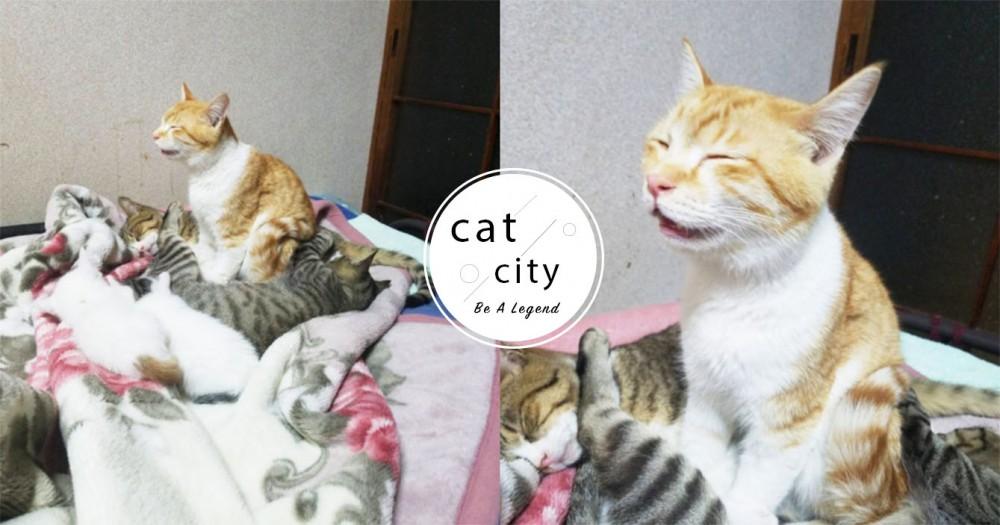 這樣也行?!日本橘貓「瞇眼張嘴」站著睡,獵奇睡姿網笑翻:在打坐?