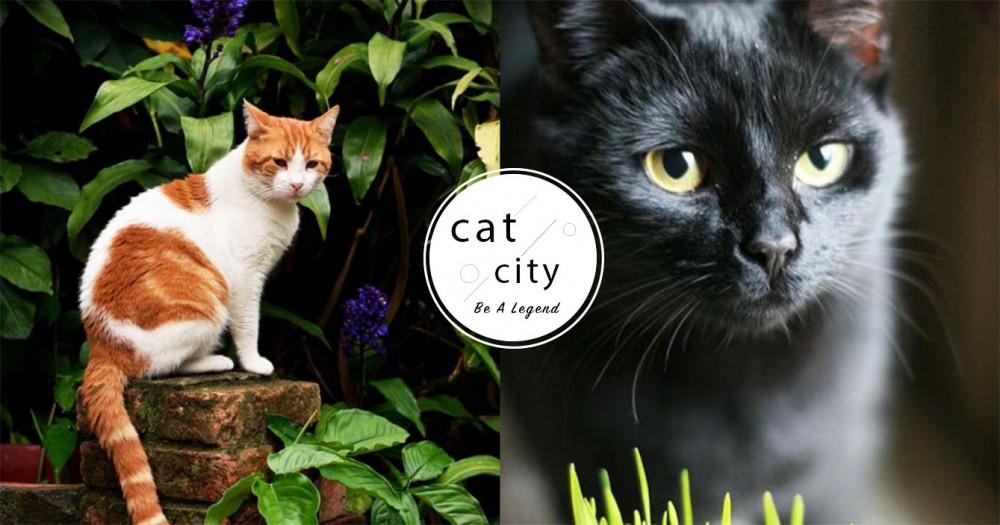 【養貓適合的植物】養貓居家!推薦對貓安全又能淨化家裡的 7 種植物~