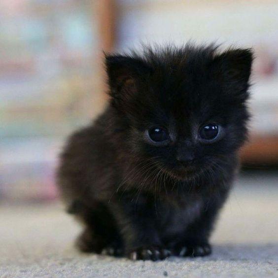 貓咪結紮,結紮好處,貓是否結紮