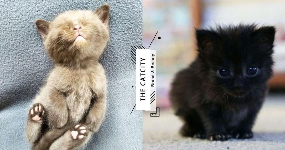 【貓咪結紮】不結紮恐致癌!關於貓結紮的 4 大好處,貓奴知多少?