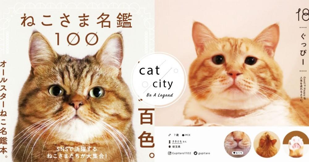 貓奴暴動!日本出版社推出「100隻貓咪圖鑑」,史上最可愛網紅貓都在這啦!