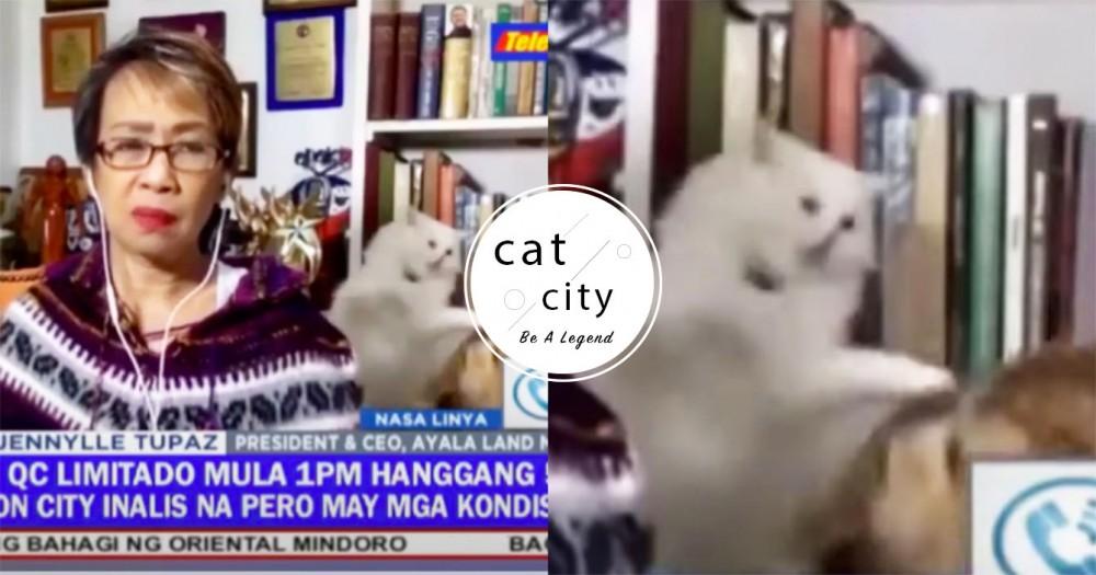 直播新聞竟變貓咪大戰?!菲律賓女記者「偷瞄裝鎮定」繼續播報,網友笑爆瘋傳!