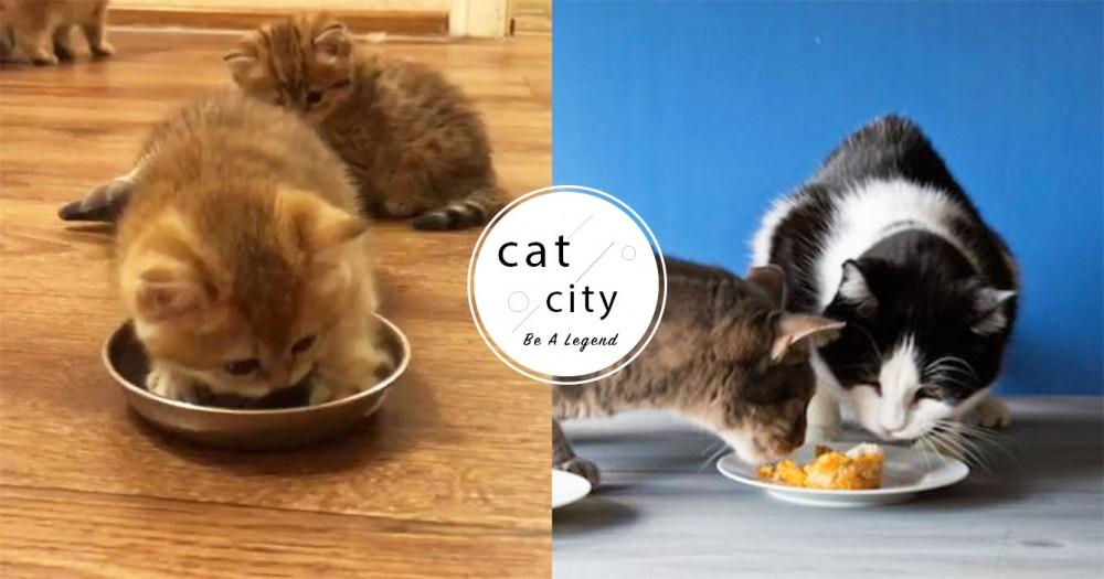 【防蟻攻略】貓飼料長螞蟻怎辦?「碗不靠牆、防蟻墊」 5 種貓奴方法大公開!