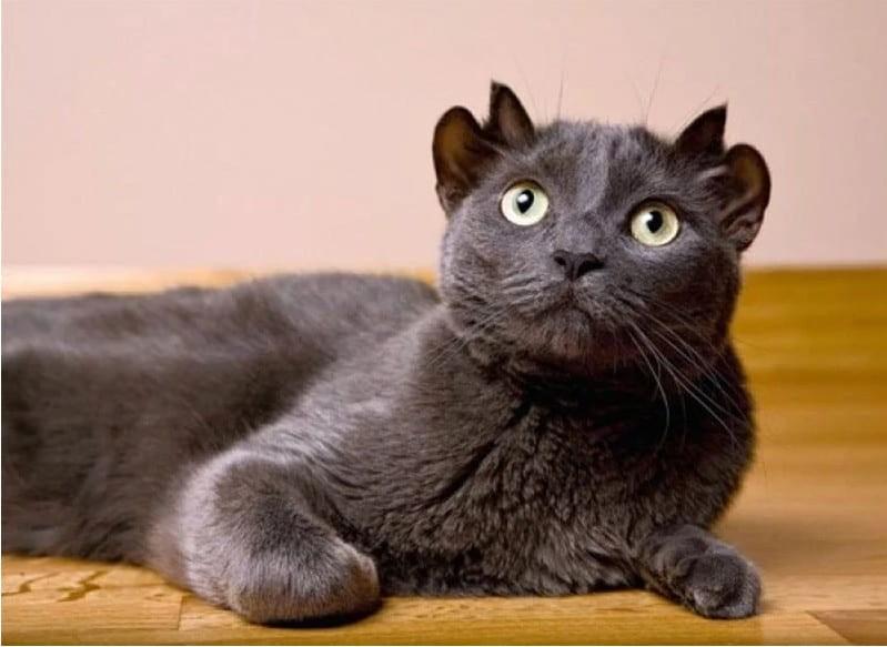 尤達,黑貓